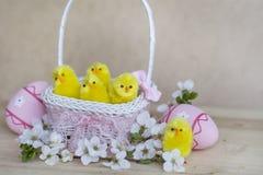 在白色篮子的桃红色复活节彩蛋与樱桃花和复活节鸡 库存照片