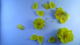 在白色织地不很细背景的黄色花 库存照片