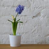 在白色罐的紫色花在白色砖墙上 库存照片