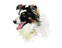 在白色背景传染媒介隔绝的博德牧羊犬动物狗水彩例证 免版税库存图片