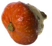 在白色背景侧视图的Pumplin 免版税库存照片