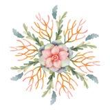 在白色背景和多汁植物隔绝的水彩传染媒介圆的坛场仙人掌 免版税库存图片