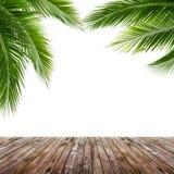 在白色背景和木地板隔绝的椰子叶子 免版税库存图片