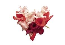 在白色背景和玫瑰色花心脏隔绝的红色 开花做的重点 库存照片
