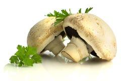 在白色背景和荷兰芹隔绝的蘑菇 库存图片