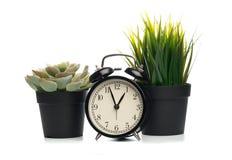 在白色背景和黑时钟隔绝的多汁植物 库存照片