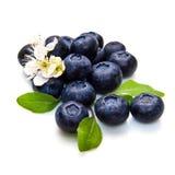 蓝色莓果和白花 库存图片