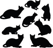 在白色背景在坐的姿势的猫剪影隔绝的 免版税图库摄影