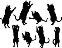 在白色背景在拳击姿势的猫剪影隔绝的 免版税图库摄影