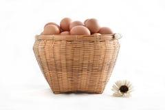 在白色背景填装的篮子的鸡蛋 免版税库存照片