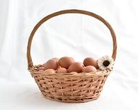在白色背景填装的篮子的鸡蛋 库存照片