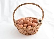 在白色背景填装的篮子的鸡蛋 库存图片