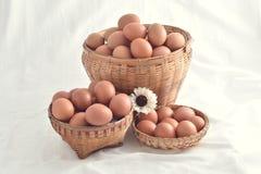 在白色背景填装的篮子的鸡蛋 免版税图库摄影