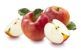 在白色背景天际隔绝的红色湿蜂蜜咬嚼苹果 库存照片