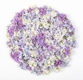 在白色背景安排了隔绝的淡紫色花在圆形 平的位置 库存照片