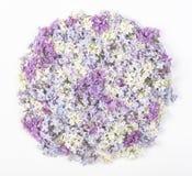 在白色背景安排了隔绝的淡紫色花在圆形 平的位置 库存图片