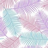 在白色背景异乎寻常的tr的紫色桃红色和蓝色棕榈叶 免版税库存图片