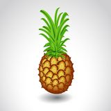 在白色背景成熟水多的菠萝 库存图片