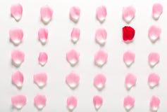在白色背景排列的玫瑰花瓣 免版税库存照片