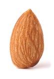 在白色背景特写镜头宏指令隔绝的一枚杏仁坚果 免版税库存照片