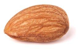 在白色背景特写镜头宏指令隔绝的一枚杏仁坚果 免版税图库摄影
