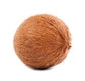在白色背景的一个坚硬椰子 热带的椰子 鲜美饮食的异乎寻常的果子 滋补夏天快餐的坚果 库存图片