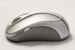 在白色背景的一只两口气灰色老鼠 库存图片