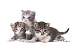 在白色背景的三只小小猫 图库摄影