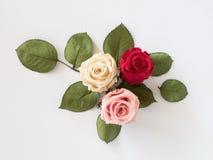 在白色背景的三朵五颜六色的玫瑰 免版税图库摄影