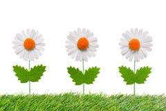 在白色背景的三朵人为雏菊。 免版税库存图片