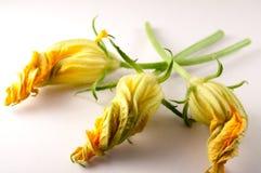在白色背景的三朵夏南瓜花 库存图片