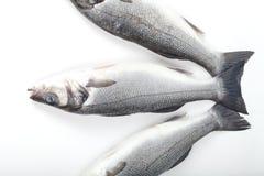 在白色背景的三条雪鱼鱼 库存照片