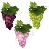 在白色背景的三葡萄品种 库存图片