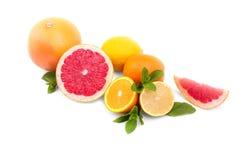 在白色背景的不同的柑橘 热带水果:葡萄柚、桔子和柠檬 绿色薄荷叶子 库存图片