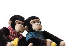 在白色背景的两只被充塞的猴子 库存照片