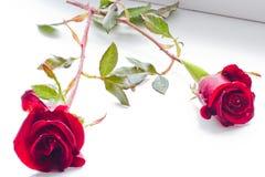 在白色背景的两朵美丽的玫瑰 免版税库存图片