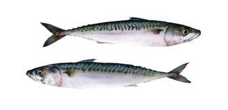 在白色背景的两条新鲜的水彩鱼 库存照片