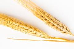 在白色背景的两粒大麦枝杈 顶视图 免版税库存照片