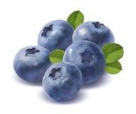 在白色背景的五个蓝莓 免版税图库摄影