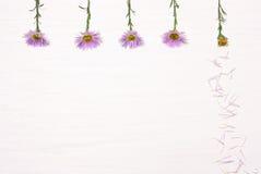 在白色背景的五朵花 库存图片