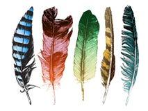 在白色背景的五颜六色的手拉的羽毛 免版税图库摄影