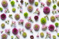在白色背景的五颜六色的花的布置 免版税库存照片