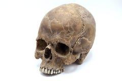 在白色背景的人的头骨 免版税库存照片