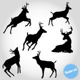 在白色背景的传染媒介集合剪影鹿 免版税库存图片