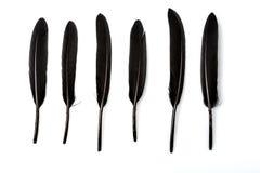 在白色背景的六根黑羽毛 免版税库存照片