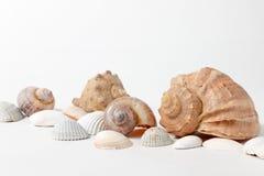 在白色背景的几个贝壳 图库摄影