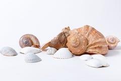 在白色背景的几个贝壳 免版税库存照片