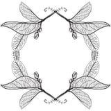 在白色背景的叶子等高 花卉边界 剪影fra 向量例证