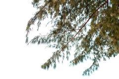 在白色背景的叶子隔离 库存照片