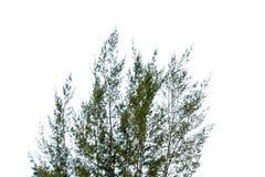 在白色背景的叶子隔离 免版税图库摄影